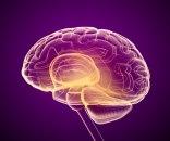 Naučnici smislili način da poboljšaju pamćenje za čak 30 odsto