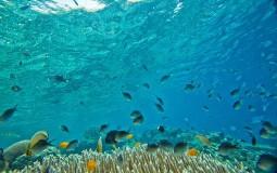Naučnici otkrili da neke ribe menjaju pol zbog stresa