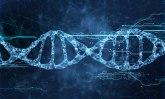 Naučnici otkrili potpuno drugačiji oblik DNK u ljudskim ćelijama /FOTO