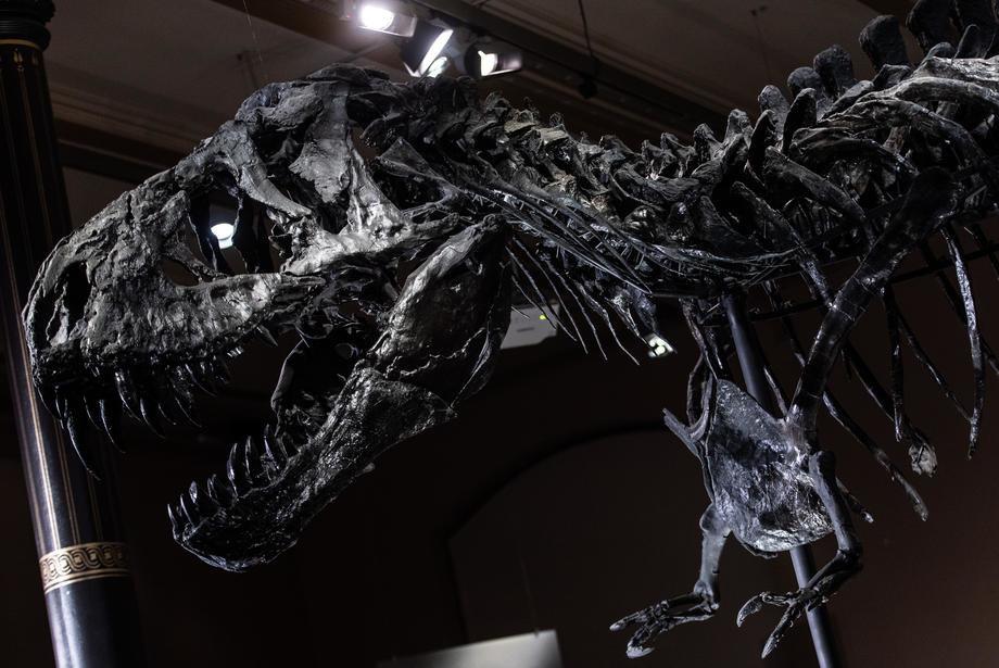 Naučnici otkrili prve ostatke embriona iz roda tiranosaurus