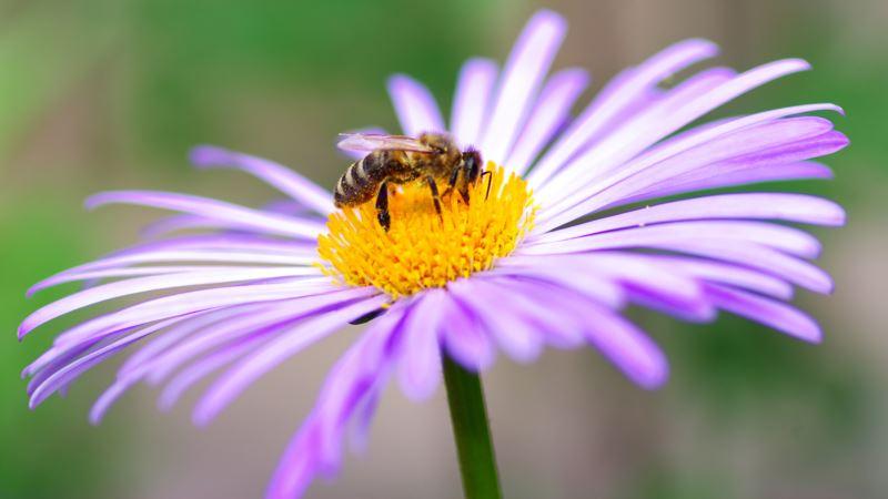 Naučnici upozoravaju na katastrofalno izumiranje insekata