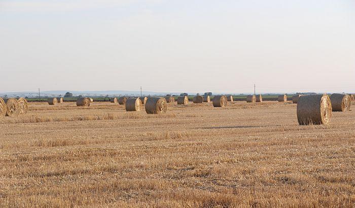 Nedimović: Poljoprivrednici ne moraju da vode poslovne knjige
