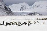 Nenormalni uslovi: Na Antarktiku toplije nego u Srbiji