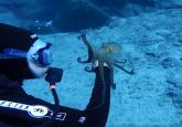 Magični momenat na dnu okeana /VIDEO