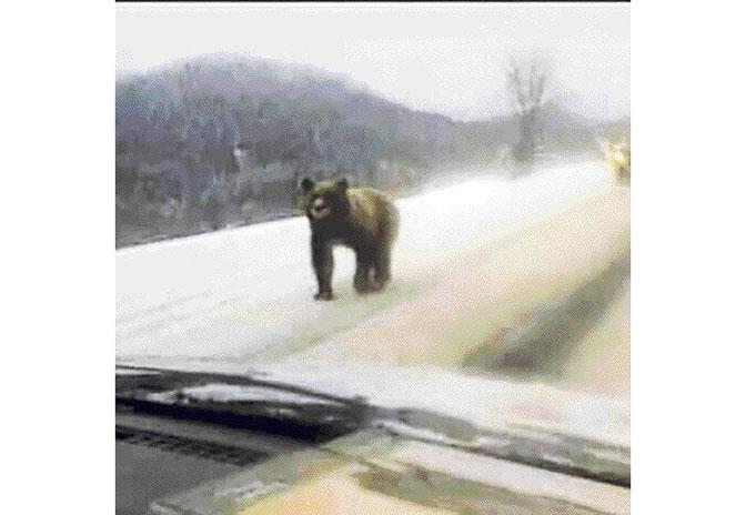Nesvakidašnji prizor na Pešteri – Oči u oči sa medvjedom