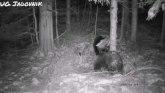 Neverovatna igra medveda na planini Jadovnik FOTO