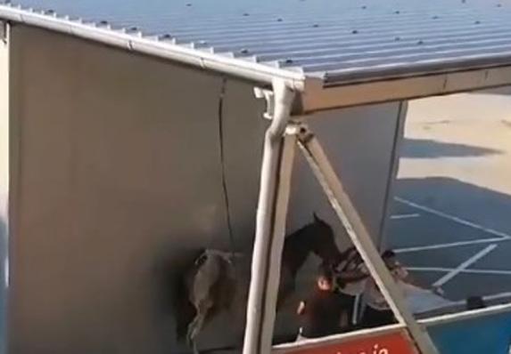 Neverovatna scena u Novom Sadu! Kupaju konja u perionici! (VIDEO)