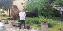 Nevreme u Vršcu srušilo više stabala