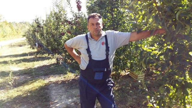 Nezadovoljni proizvođači jabuka: Ubiraju plodove a ne znaju ni cenu, ni kupca