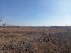 Nova ekonomija: Na Makiškom polju zbog metroa sledi seča drveća, isušivanje, nasipanje peskom