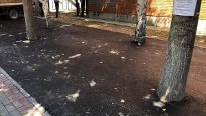 Nova stranka: Zabetoniran drvored u Knjaževcu dokaz da je priroda najveći neprijatelj naprednjačke vlasti