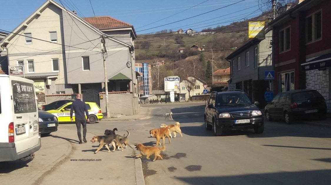 Novi Pazar gradi prihvatilište za pse i mačke
