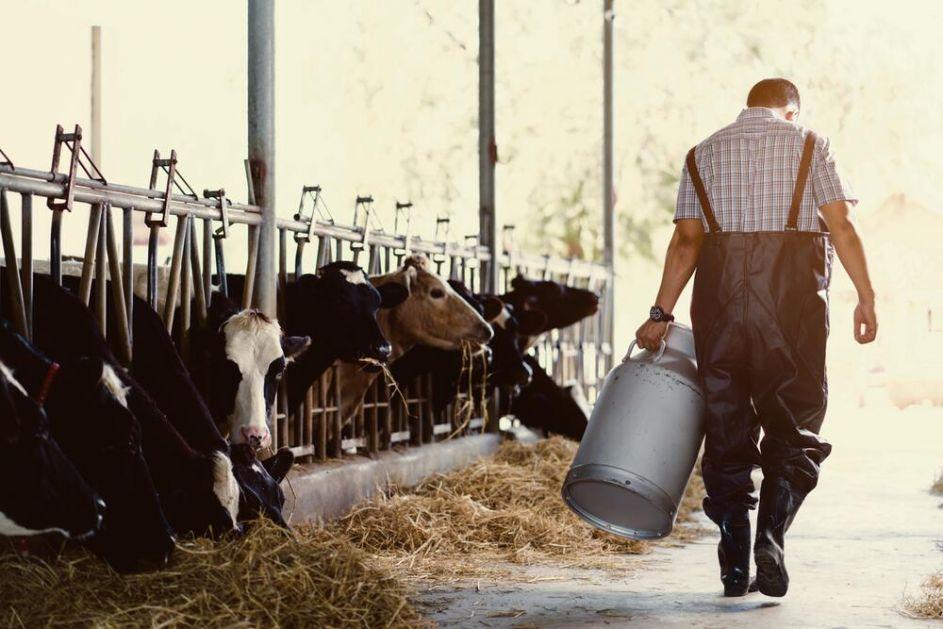 OČAJNI: Mlekari traže poskupljenje mleka sa 30 na 56 dinara u otkupu