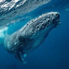 OTKRIĆE STARO NAJMANJE 3000 GODINA: Pronađen skelet retke vrste kita (FOTO)