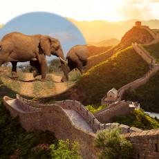 OTKRIVENA ŽIVOTINJA ČETIRI PUTA VEĆA OD SLONA: Kinezi pronašli grdosiju i zapanjili svet neobičnim stvorenjem!