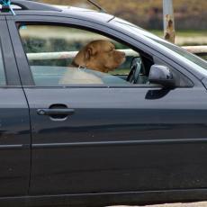 OVO ĆE VAS NASMEJATI: Pas koji glumi nestrpljivog vozača! (VIDEO)