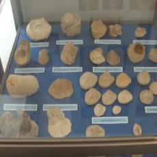 OVO NIKAKO NE SMETE PROPUSTITI: Rađanje Fruške gore - izložba fosila iz LEDENOG DOBA sa prostora SRBIJE! (FOTO)