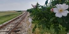 Od 16. juna letnja sezona saobraćaja vozova od Beograda do Bara