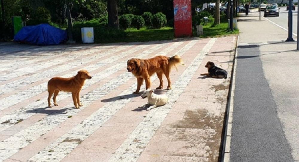 Oglasila se opština Prijepolje nakon stravičnog napada pasa lutalica