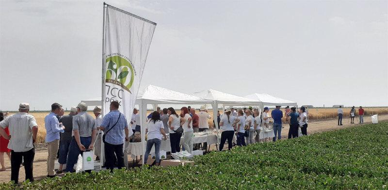 Ogledno dobro PSS Vrbas: Preko 70 sorti strnih žita za primer proizvođačima