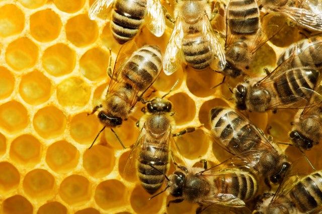 Ogromni gubici za pčelare: Štetu će pretrpeti i država