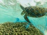 Oko 300 ugroženih kornjača stradalo u Meksiku
