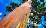 One su remek delo prirode, svojim bojama privlače turiste, ali su i - SMRTONOSNE: Šume koje stvaraju udovice (VIDEO)