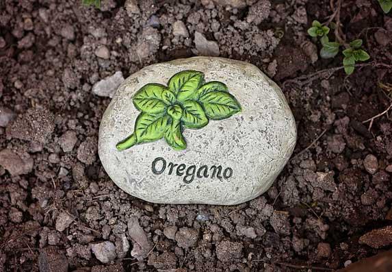 Origano: Najjači prirodni lek za pluća! Čini čuda za organizam!