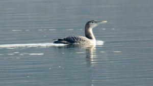 Ornitolozi otkrili novu vrstu ptica u fauni Srbije