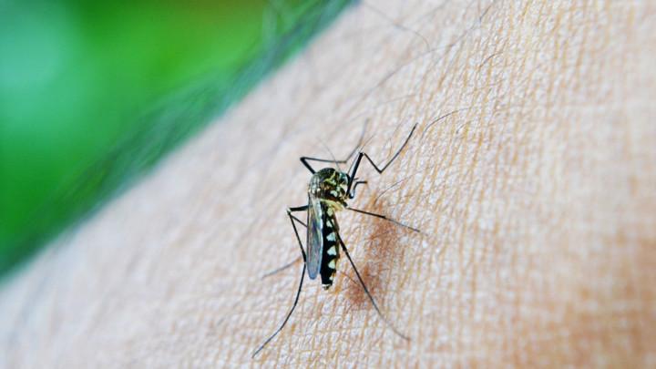 Otkrite dosad neviđeni način zaštite od komaraca: Poprskajte stan sprejom od ove stare biljke, a postoji trik i u našem znoju