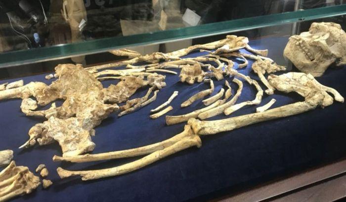 Otkriven skelet ljudskog pretka star 3,6 miliona godina