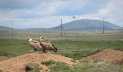 Otkrivena nova vrsta ptice u fauni Srbije: azijski zlatni vivak fotografisan na jezeru na ...