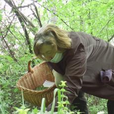 Ova biljka okrepljuje čak i medvede: Divlji beli luk raste na padinama Jelice (FOTO)