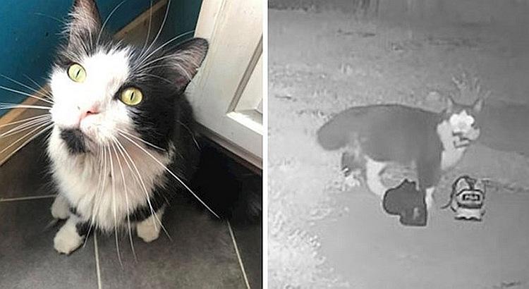 Ova mačka toliko voli da krade da je njen vlasnik napravio FB grupu za povrat stvari (FOTO)