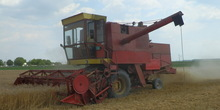 Ovogodišnji rod pšenice sličan lanjskom