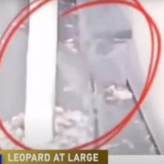 PANIKA U JEDNOM OD NAJVEĆIH GRADOVA U KINI: Ulicama hodaju opasne zveri, divlje životinje pobegle iz zoo vrta (VIDEO)