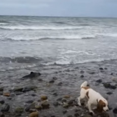 PAS JE OTRČAO DO VODE I TAD JE POČELA DRAMA! Vlasnik dotrčao i započeo akciju spasavanja (VIDEO)