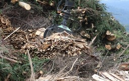 PKS: Biomasa - neiskorišćen potencijal u Srbiji