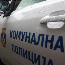 POSLEDNJA SEDMICA OBUKE - STIŽE POJAČANJE: Uskoro 92 nova komunalna milicajca na beogradskim ulicama
