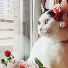 PRESLATKO! Zbog jednog detalja ova maca je postala zvezda! (FOTO)