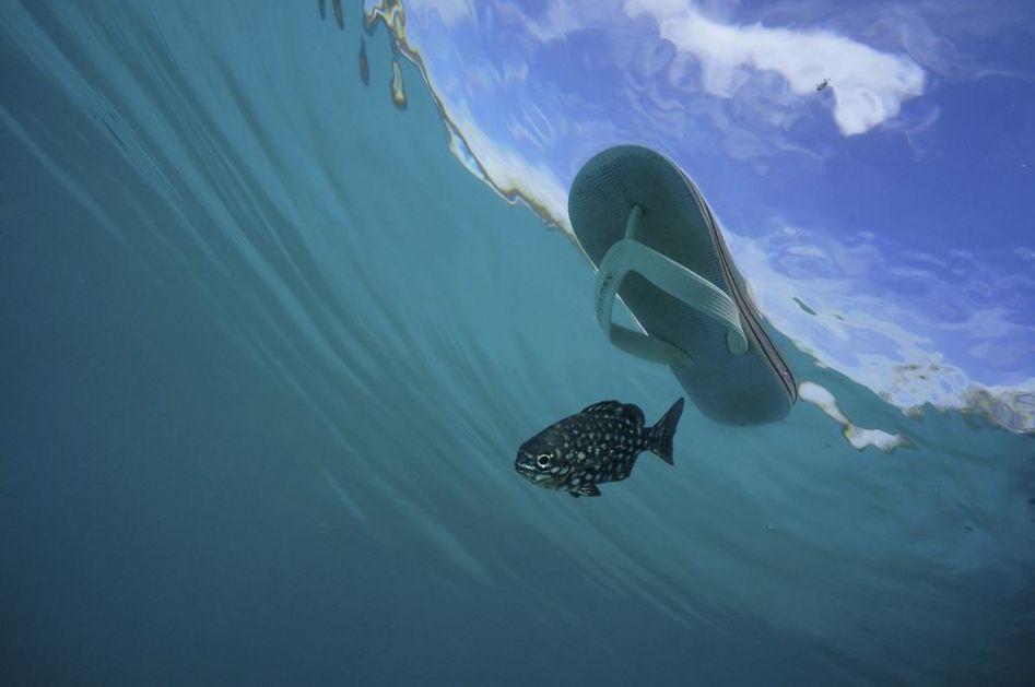 PRETERALI SMO! Već 35 odsto morskog sveta zaraženo mikroplastikom! Zagađenje je već previše uzelo maha!