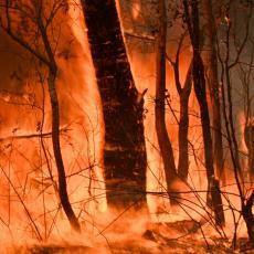 PRIRODNE KATASTROFE ZAHVATILE ČITAV SVET: U Rusiji besni gotovo 270 šumskih požara