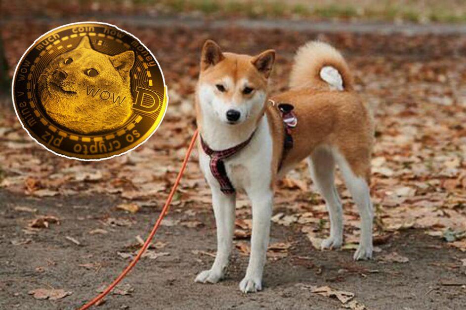 PROKLETSTVO MASKOTE DOGKOINA Psi Šiba Inu zbog kriptovalute sve traženiji, ali je njihova sudbina kod novih vlasnika često jeziva!