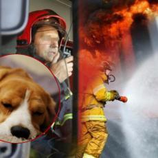 PRVO SPASITE MOG PSA Detalji drame u Novom Sadu: Stajao je na prozoru zgrade u plamenu i molio samo za JEDNO!