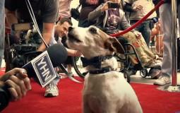 Pas Agi ponovo dobitnik nagrade Palm dog Kanskog festivala