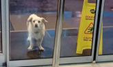 Pas čekao vlasnika nedelju dana ispred bolnice