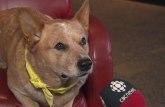 Pas, kandidat za gradonačelnika: Novinari ga obožavaju /VIDEO