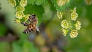 Pčelari Kladova donirali 96 kilograma meda