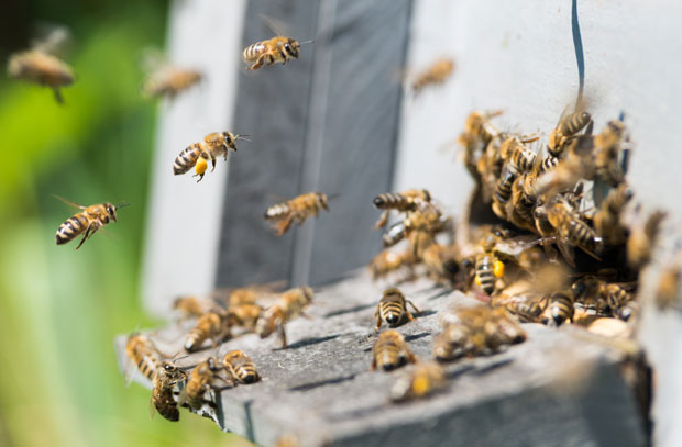 Pčelari Priboja pomažu najugorženijm sugrađanima