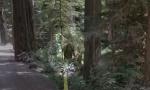 """Pet fotografija sa """"Gugl"""" mape koje niko ne može da objasni (VIDEO)"""